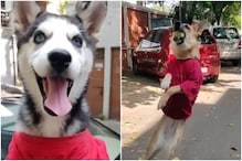 Super Competitive Doggos Playing Gully Cricket Give Professional Players Run for Their Money