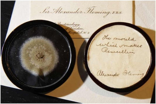 Alexander Fleming's mould | Image credit: AP