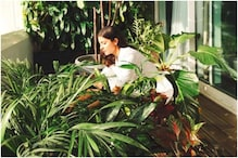 Jungle-Theme Décor: Hanging Indoor Plants Best for Creating Wilderness
