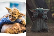 Tiny Kitten Resembling Baby Yoda Rescued from California Fires is Restoring Our Faith in Humanity