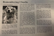 US Woman Shares Heartbreaking Obituary for Pet Who Lost Battle with Cancer: 'This One's the Hardest'