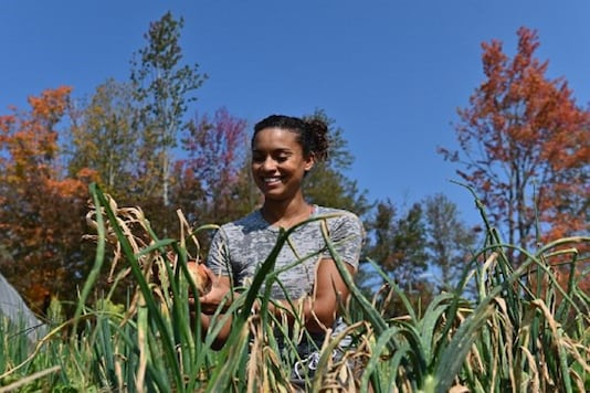Brooke Bridges, assistant kitchen manager at Soul Fire Farm and public speaker harvests onions in Petersburg, New York. (Credit: AFP)