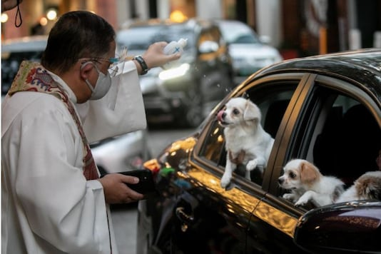Pets in Philippines are Getting Blessed in Drive-Through Ceremony amid Pandemic