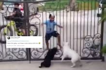 Watch: Dogs Reacting to This Young Boy's 'Bhangra' Moves is Leaving Netizens in Splits