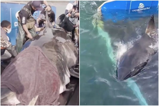 A team of researchers has found a giant shark in Canada   Image credit: Twitter