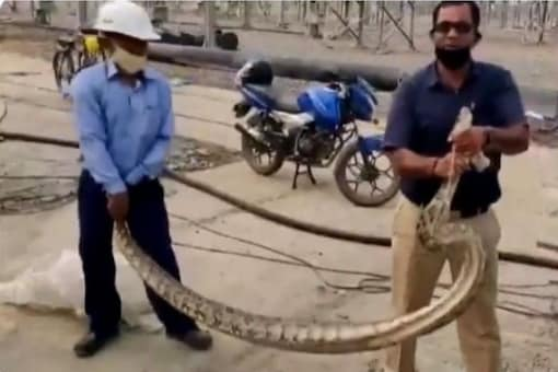 Video grab of people catching the python.  (Credit: ANI)