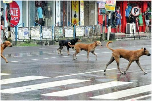 Video of stray dogs waiting  to cross road is going viral | Image for representation | Credit: Reuters