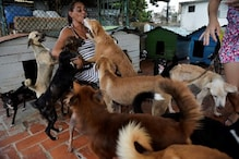 'Can Never Stop Saving Them': Cuban Animal Lovers Hopeful New Laws Will Change Attitudes