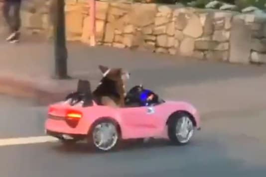 Screenshot of the video showing the dog cross the road.