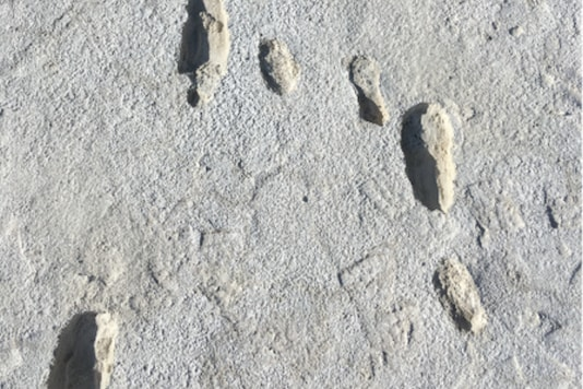 Image of the fossilised footsteps.