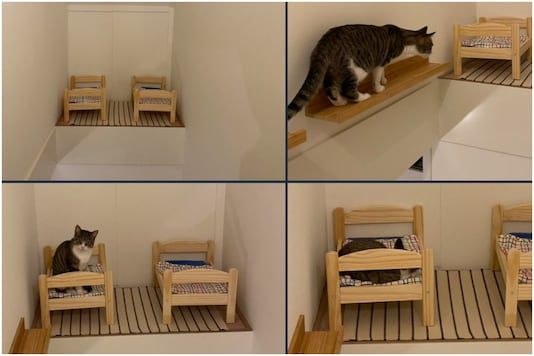 Photos of cute little beds built for cats is inspiring other cat lovers   Image credit: Twitter