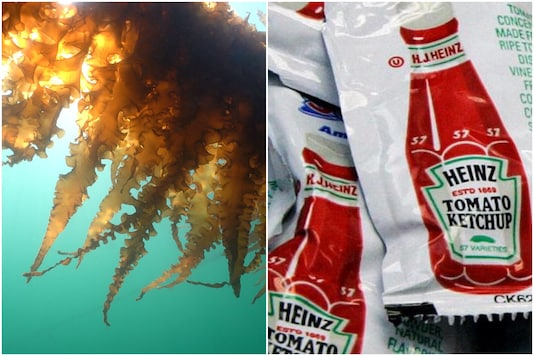 Sachets of condiments are a major source of pollution   Image credit: Reuters/Reuters (Representational)