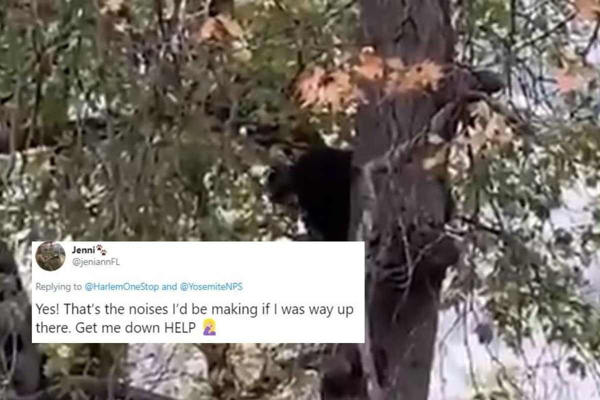 Melody or Crying for Help: Black Bear 'Singing' Atop Tree in Park has Confused the Netizens