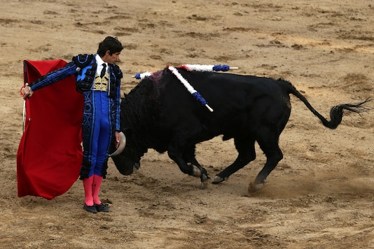 French bullfighter Sebastian Castella performs a pass to a bulll during a bullfight at Peru's historic Plaza de Acho bullring in Lima, Peru. (File photo for representation/REUTERS)