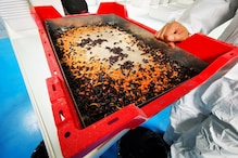 French Startup Ynsect to Build World's Biggest Bug Farm to Tackle Global Food Demand