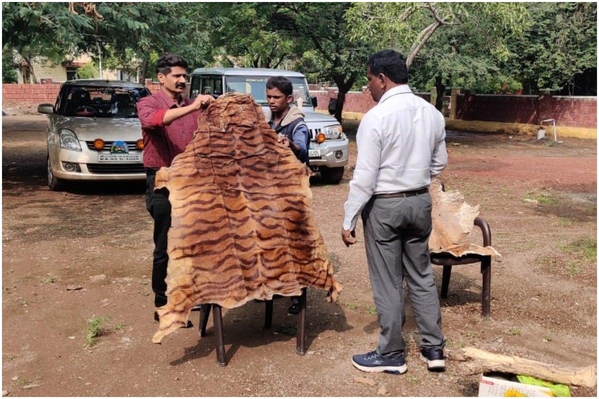 Karnataka Astrologer Arrested for Possessing Illegal Blackbuck and Tiger Skins, Claws at Home