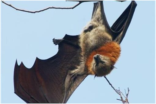 Vampire bats know how to social distance when they fall sick | Image credit: Reuters