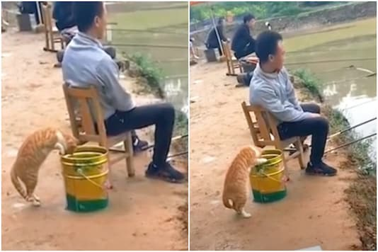 A cat was caught trying to steal fish from an angler's bucket in China   Image credit: YouTube