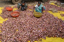 Festive Cheer for Households as Onion Prices Show Declining Trend after Touching Record Highs