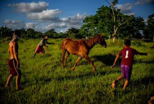 Wearing masks as a precaution against the spread of the new coronavirus, boys play with a horse at sunset in Wajay, Havana, Cuba, Tuesday, Oct. 13, 2020. (AP Photo/Ramon Espinosa)