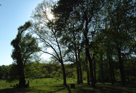 Trees border a green field at Prospect Park in the Brooklyn borough of New York on May 10, 2020. Writer Jennifer Lehman found solace being near trees during the darkest days of the pandemic and in the months that followed. (AP Photo/Jennifer Lehman)