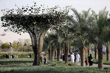 Green Fines: UAE Businesses Swap Pollution Penalties For Tree Plantation