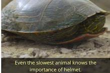 Pune Police Sensitise Netizens on Importance of Helmets through Viral Turtle Post