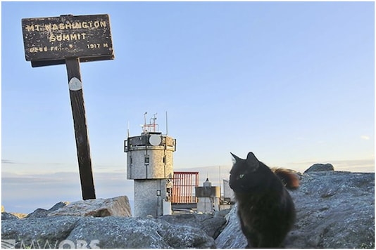Marty the Maine coon cat was on mountain patrol for 12 years   Image credit: AP