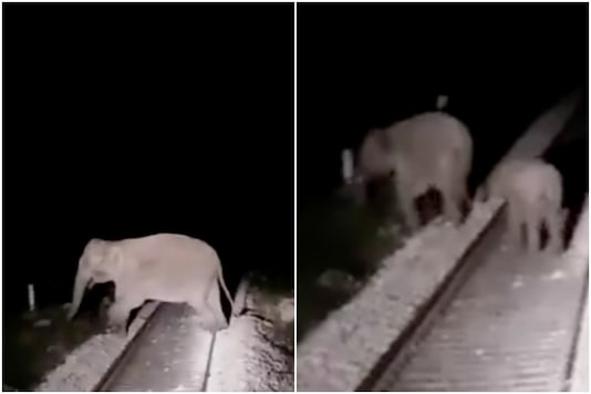 The elephants were found crossing railway tracks at Sivok-Gulma section in West Bengal | Image credit: Twitter