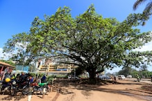 'Beacon of Cultural Heritage': Kenya's President Saves 100-year-old Fig Tree from Chinese-funded Highway