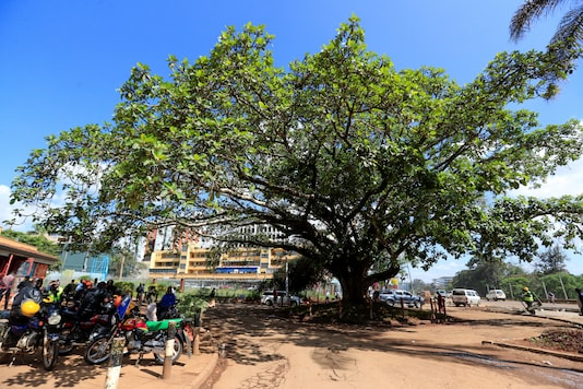 Motorcycle riders sit in the shade provided by the iconic, century-old fig tree during a protest to save it from being cut down to pave way for a Chinese-funded highway, in Westlands district of Nairobi, Kenya November 11, 2020. REUTERS/Thomas Mukoya