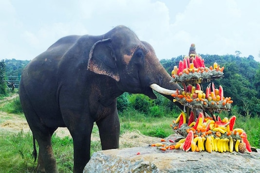 Rescued elephant adopts to new life in Bengaluru zoo. (Photo: IANS)