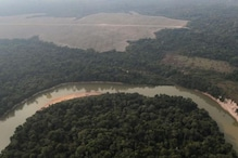 Deforestation in Brazil's Amazon Increases for the First Time in Four Months, 50% More Than 2019