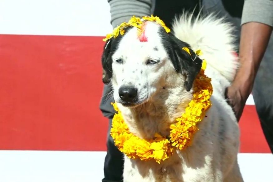 People celebrate Kukur Tihar in Kathmandu, Nepal as part of their five-day celebrations during Diwali. Visuals from an animal shelter, named Sneha's Animal Care Shelter, in Nepal. According to reports, the owner of the shelter came up with the idea after her own pet was poisoned to death by her neighbour. Credit: Facebook/ANI