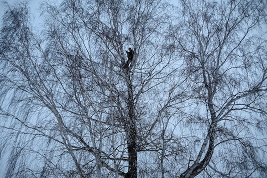 Alexei Dudoladov, student and popular blogger, is seen on a birch tree for better cellular network for his online classes in the Siberian village of Stankevichi. (Credit: REUTERS/Alexey Malgavko)