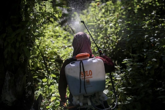 A female worker sprays herbicide in a palm oil plantation in Sumatra, Indonesia, on Saturday, Sept. 8, 2018. Many women are hired by subcontractors on a day-to-day basis without benefits, performing the same jobs for the same companies for years and even decades. They often work without pay to help their husbands meet otherwise impossible daily quotas. (AP Photo/Binsar Bakkara)