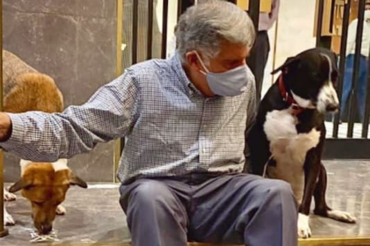 Ratan Tata with his dogs in Bombay House. (Credit: Instagram/ @ratantata)