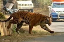 Gurugram Forest Department to Install Fences, Signages on Highway to Save Animals from Accidents