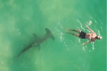 Watch: Terrifying Drone Footage Shows Man Swimming Above Hammerhead Shark in Miami