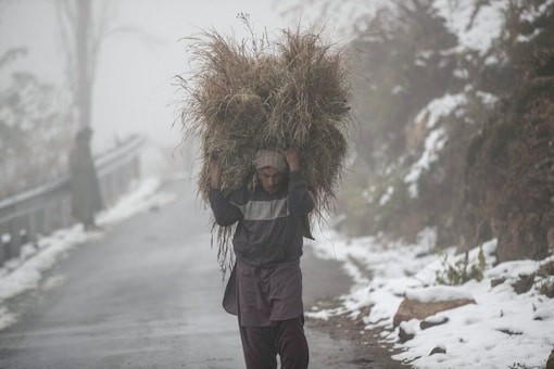 A Kashmiri villager carries fodder on a cold and foggy day after the season's first snowfall on the outskirts of Srinagar, Indian controlled Kashmir, Tuesday, Nov. 24, 2020. (AP Photo/Mukhtar Khan)