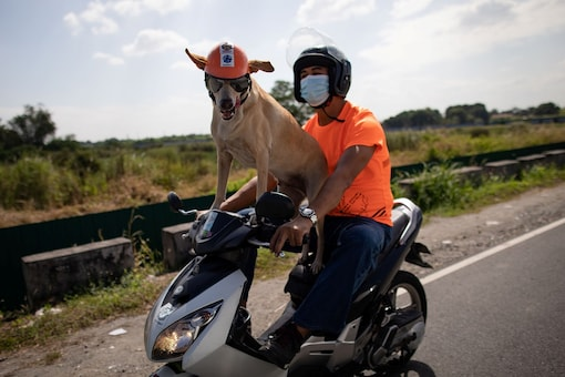 Motorcycle enthusiast Gilbert Delos Reyes rides with his pet dog Bogie, in Kawit, Cavite, Philippines, November 26, 2020. Picture taken November 26, 2020. REUTERS/Eloisa Lopez