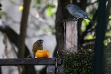 The Earth is Home to Over 50 Billion Birds, Six Times More Than Humans, Finds Study