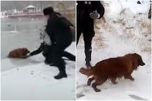 Cops in China Pull Out Wimpering Golden Retriever from Semi-frozen Lake, Viral Video Wins Hearts