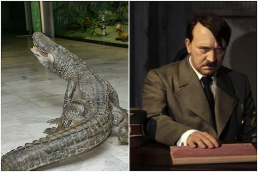 Alligator named Saturn who was famed to have been Adolf Hitler's pet to be immortalised in Moscow's Darwin Museum   Image credit: Facebook/Reuters