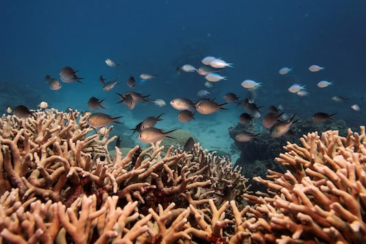 A school of fish swim above a staghorn coral colony as it grows on the Great Barrier Reef off the coast of Cairns, Australia. REUTERS/Lucas Jackson/Files