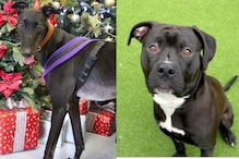 'Paw-fect Match': Animal Shelters Across UK Write Letters to Santa to Find Forever Home for Pooches