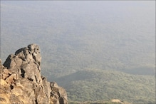 Asiatic Lions Return to Girnar Forest After State Dept Take Up Drive to Restore Wildlife