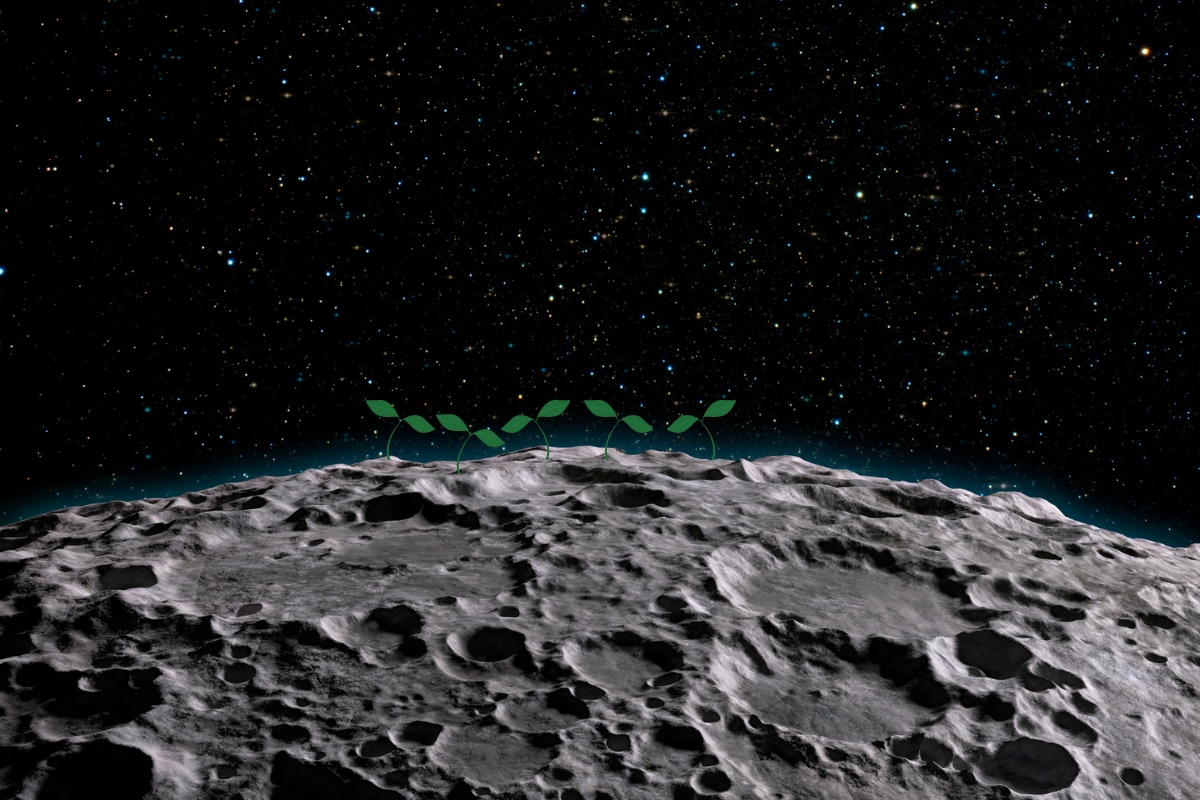 Can China Plant Vegetables on the Moon? Here's What the Lunar Soil Samples Reveal - News18