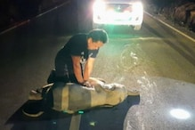 Baby Elephant Hit by Motorcycle in Thailand Survives After Receiving CPR, Video Goes Viral