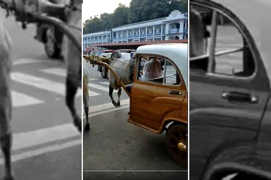 A screenshot of the video posted by Anand Mahindra. (Photo Courtesy: Twitter/Anand Mahindra)